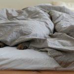 Dormir avec son chat, est-ce une bonne habitude ?
