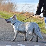 Quelle laisse pour chien choisir ? Différentes tailles et différentes matières