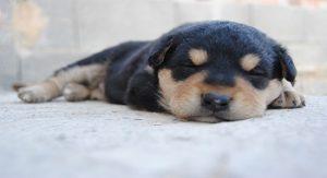 sommeil d'un chien - combien de temps dort un chien