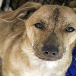 Comment adopter un chien ? Le sens des responsabilités avant tout