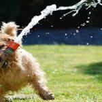 Comment boit un chien ? Une technique différente de la notre