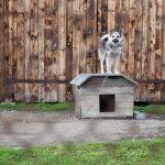 Comment et par qui faire garder son chien ? Plusieurs solutions possibles