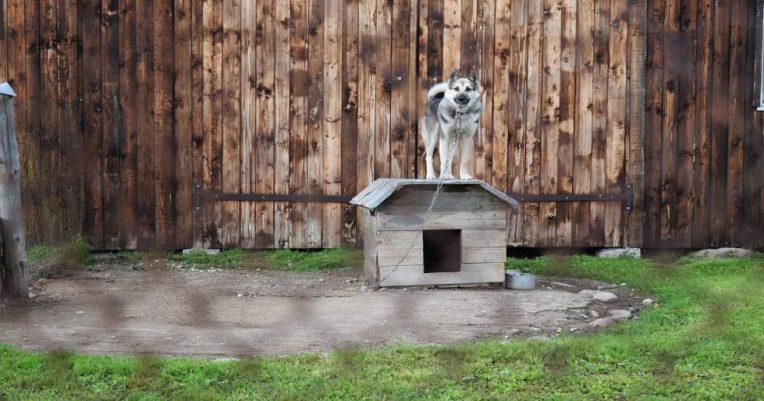 faire garder son chien plusieurs solutions
