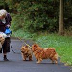 Quelles sont les solutions pour un chien qui tire en laisse ?