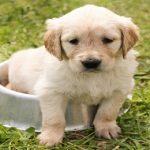 Meilleure alimentation pour chien – Croquettes ou fait-maison ?