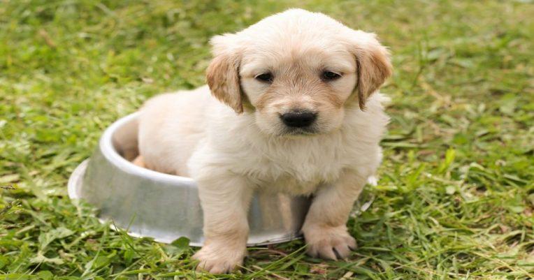 la meilleure alimentation pour chien
