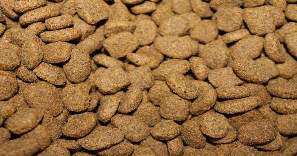meilleures croquettes pour chien