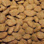 Comment bien choisir les meilleures croquettes pour chien ?