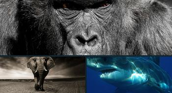 animaux en voie de disparition