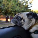 Voyager avec un chien, une simple question d'organisation