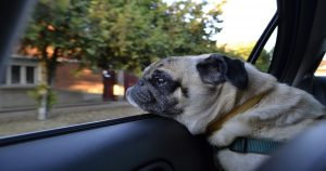 voyager avec un chien