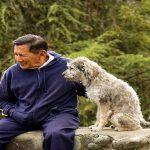 Choisir son chien : 5 éléments essentiels pour se décider