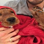 Garde de chien chez un particulier : la solution dog sitter