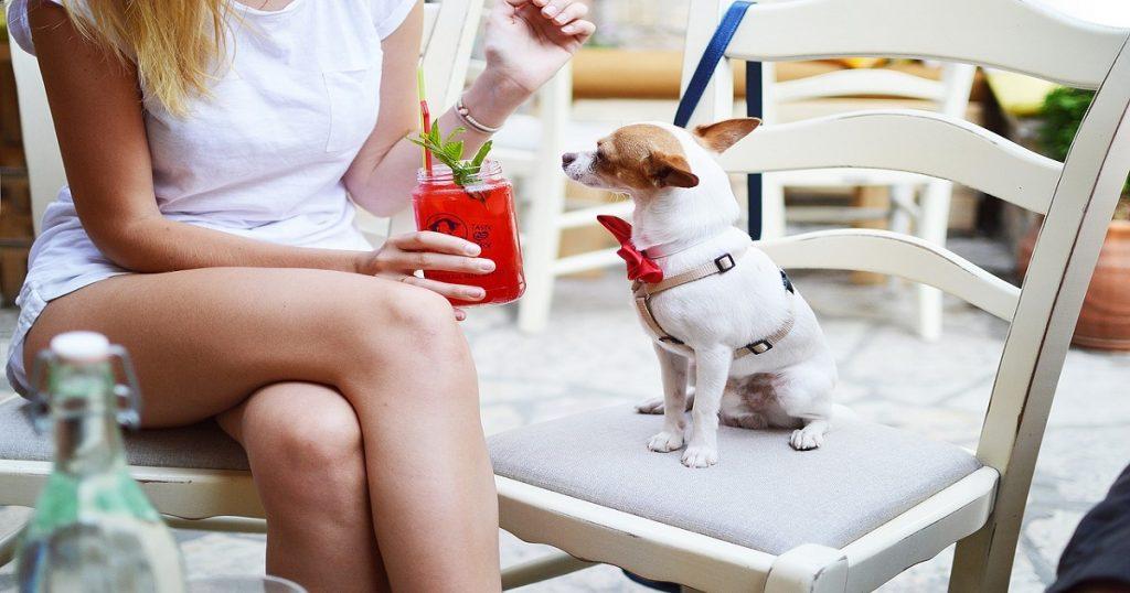 races de petits chiens : chihuahua
