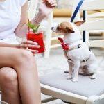 Quels sont les 20 petits chiens les plus mignons à adopter ?