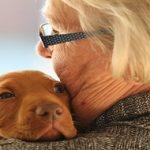 Comprendre le langage des chiens : Anxiété, peur, joie, envie de jouer…