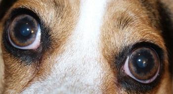 vision du chien - vue du chien