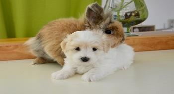 cohabitation lapin et chien