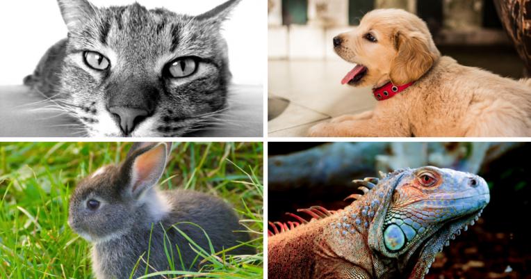 animaux de compagnie en appartement
