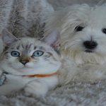 La cohabitation entre un chien et un chat est-elle possible ?