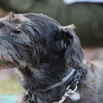 Comment soulager le mal de dos du chien ? Quelques solutions