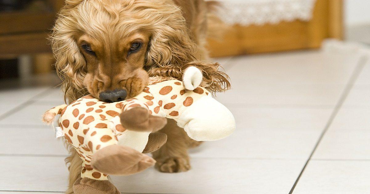 pourquoi et comment faut-il jouer avec son chien ?