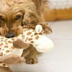Jouer avec son chien : Pourquoi et comment faut-il le faire ?