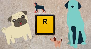 noms de chien en R