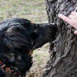 Qu'est ce que le Mantrailing et pourquoi l'apprendre à son chien ?