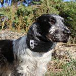 Trois accessoires de mode pour chien à avoir absolument