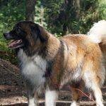 Préparer ses vacances au camping avec son chien