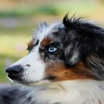 Races de chiens moyens : Notre sélection de 11 chiens