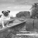 Voyager avec son chien en train : Réglementation, tarifs et conseils