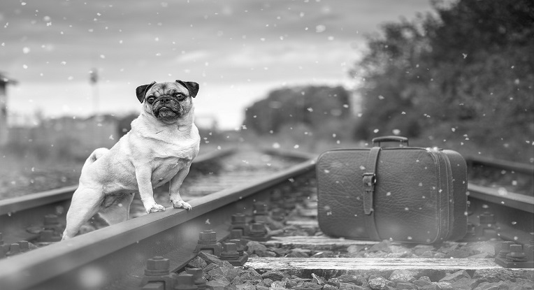 voyager avec son chien en train