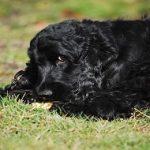 5 équipements indispensables pour balader ton chien Cocker