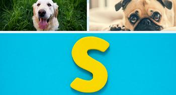 Noms de chien en S