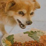 Combien de repas par jour faut-il donner à un chien ?