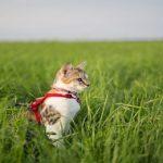 7 conseils pour le bien-être de ton chat au quotidien