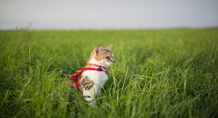 conseils bien-être chat