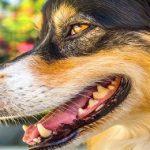 Mauvaise haleine du chien : Quelles sont les causes et les solutions