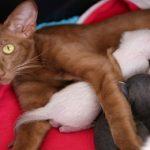 Litière autonettoyante pour chat : Comment ça fonctionne ?