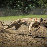 Mon chien est trop maigre : Quelles sont les causes et solutions ?