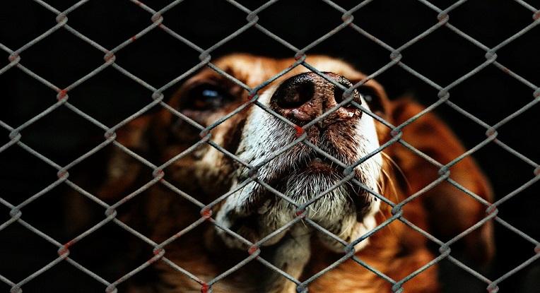 Adopter un chien en refuge
