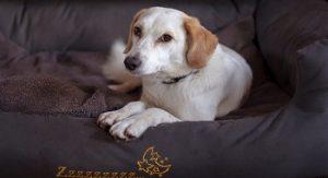 Choisir un bon panier pour chien