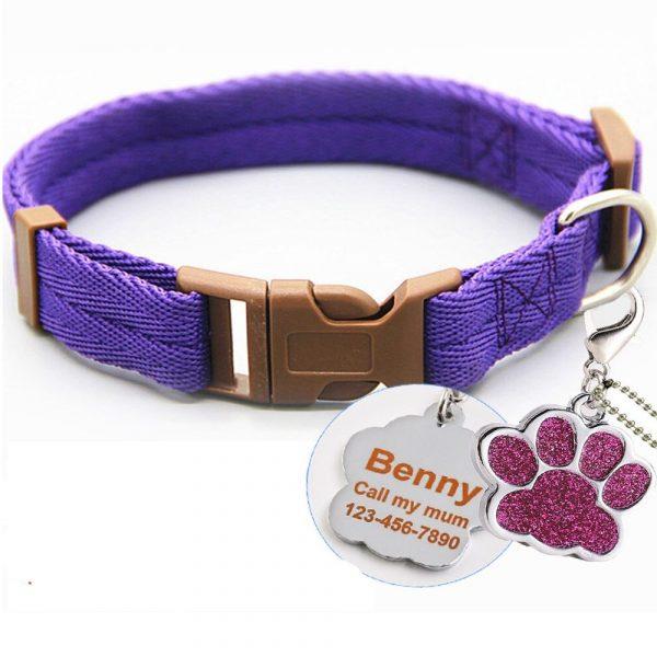 Collier violet pour chien + inscription médaille