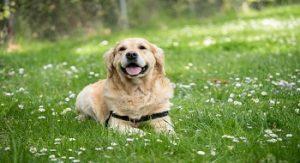 Prendre soin d'un chien âgé