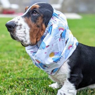 Snood Basset