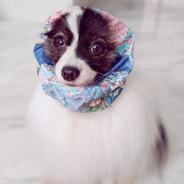 Snood petit chien