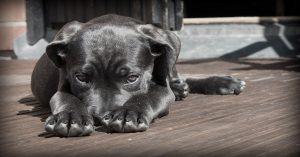 Tours à apprendre à son chien